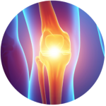 colorful skeletal depiction of the knee