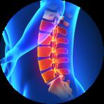 colorful skeletal depiction of the spine